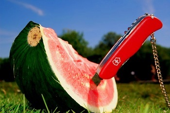 "Die gesündesten Lebensmittel Bild oben piqs.de, Der Patrick, ""Tod der Melone"" (CC BY 2.0 DE)"