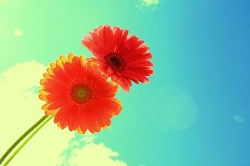 """Flirten will gelernt sein! Anleitung Bild mittig-oben piqs.de, D. Sharon Pruitt, """"Forever and Always Two Bright Flowers On Blue Sky"""" (CC BY 2.0 DE)"""