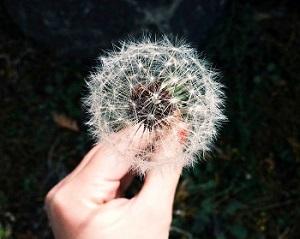 Die Sache mit dem Glück Erfahrung Bild unten unsplash.com, Coley Christine