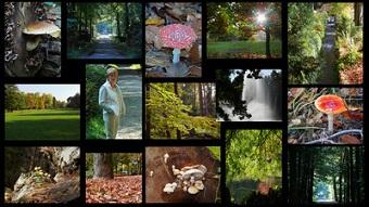 Bin ich ein Herbsttyp? Bild oben Lupo bei pixelio.de