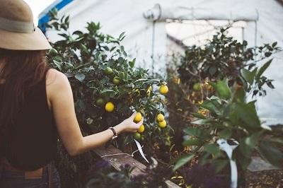 Urban Gardening Ratgeber Bild mittig