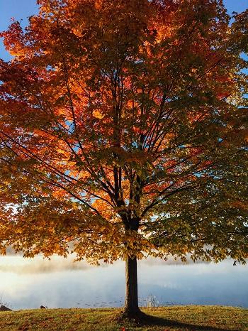 Wie man eine Herbstdepression vermeiden kann Ratgeber Bild mittig