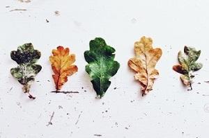 Saisonales Bild oben