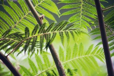 Warum die Natur so gesund ist Bild oben
