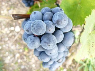 Wein per Mausklick ordern Ratgeber Bild mittig